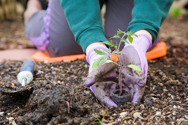 Gartenbaufirmen Hohenahr Obstbäume Gemüsebeet