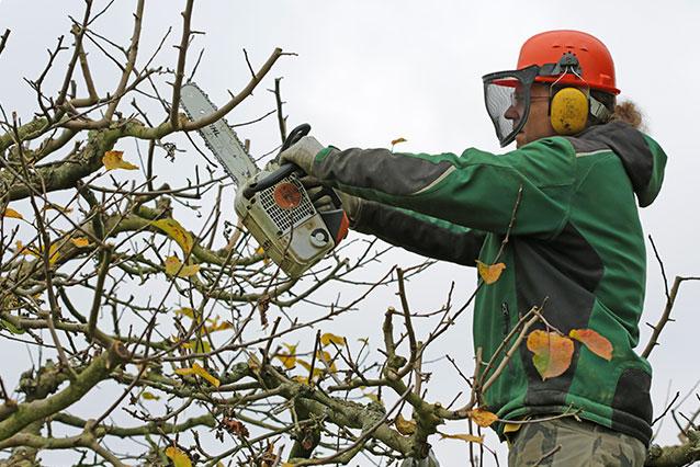 Düngen Vertikutieren Baumschnitt Hohenahr Gießen