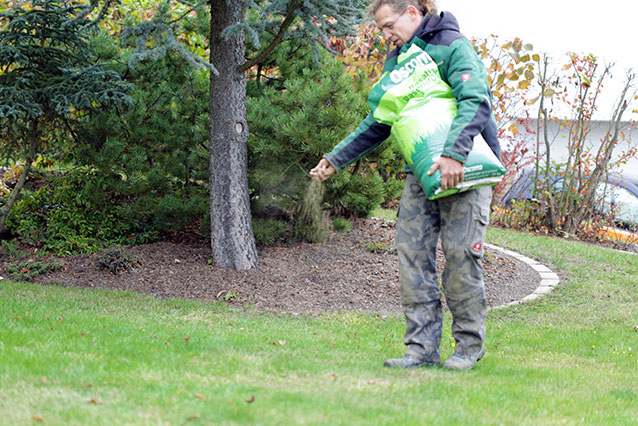 Vertikutieren Baumschnitt Strauchschnitt Herborn